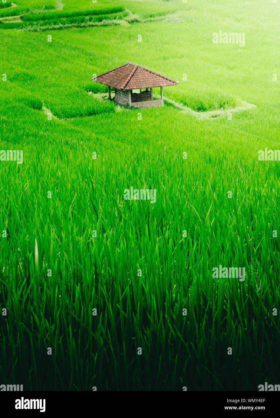 Un alto ángulo de visualización de campos verdes Foto de stock