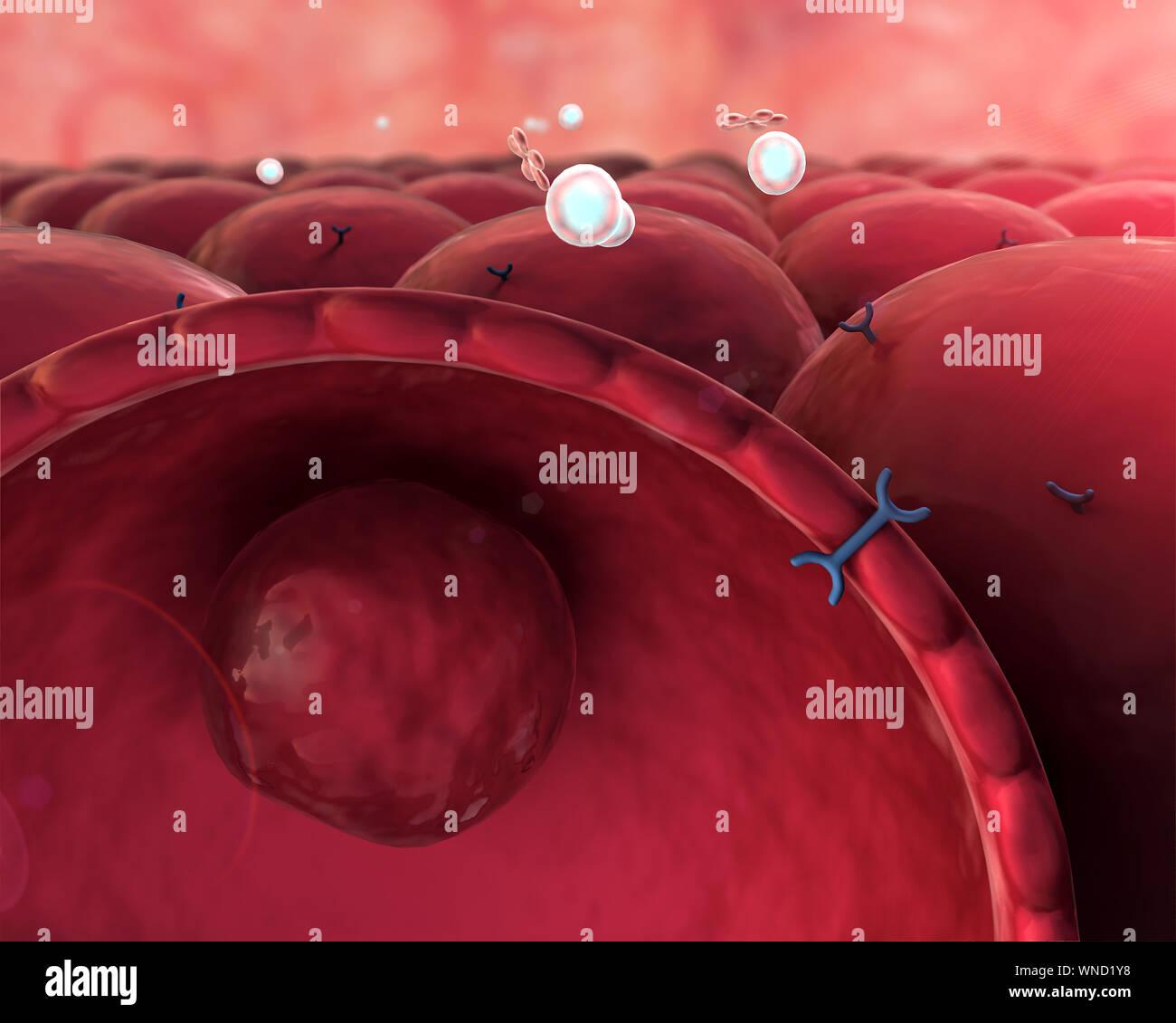 Mecanismo De Acción De La Insulina La Glucosa La Insulina