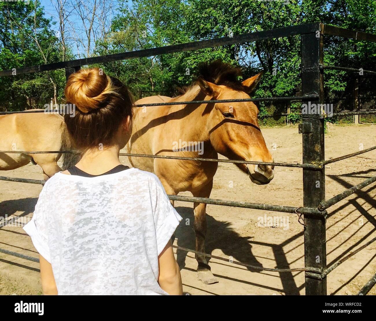 Vista trasera de la Mujer de pie a caballo en el campo durante el día soleado Foto de stock