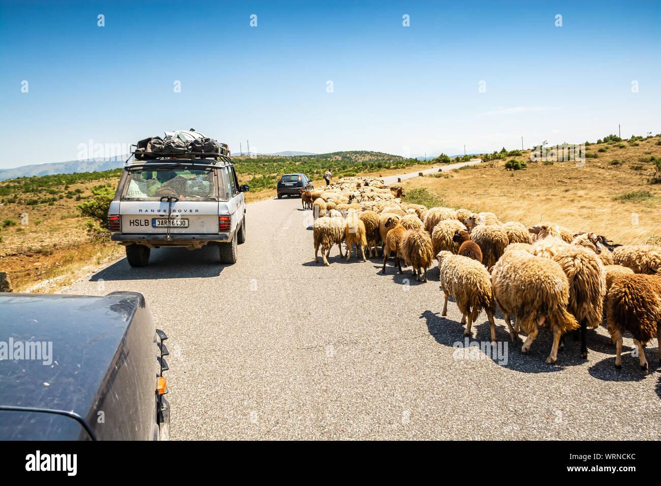 Vomitar, Albania - 23 de julio de 2019. Ovejas en la carretera Foto de stock