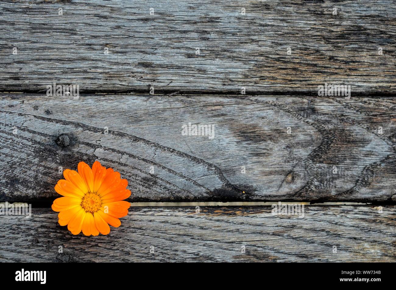 Caléndula en el vacío, el grunge mesa de madera listo para mostrar texto o producto montage Foto de stock