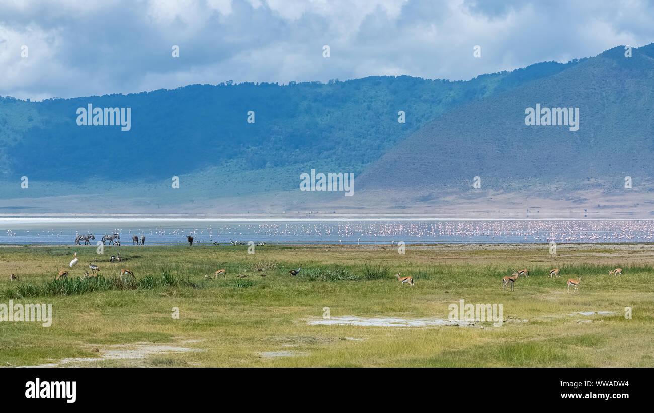 Tanzania, vista del cráter del Ngorongoro, hermosos paisajes con animales diferentes que viven juntos Foto de stock