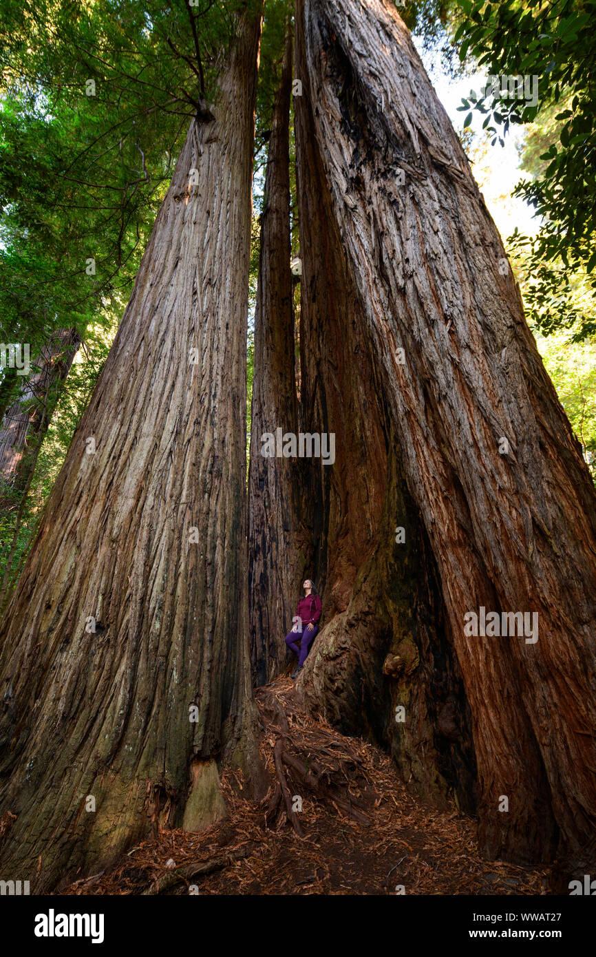 Una mujer dentro de un Sequoia y secoyas gigantes, algunos de los árboles más grandes de la tierra, a lo largo de la costa de California a los Redwoods nacional y estatal de la pa Foto de stock