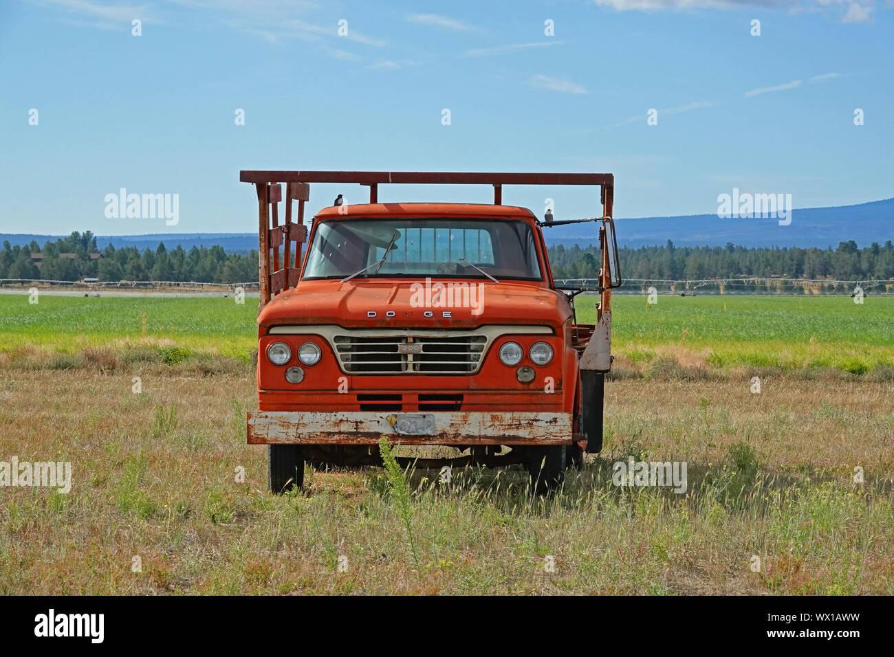 Un 1965 Dodge 300 carretilla sentado en una granja de campo después de ser abandonados por el agricultor quien lo posee. Foto de stock