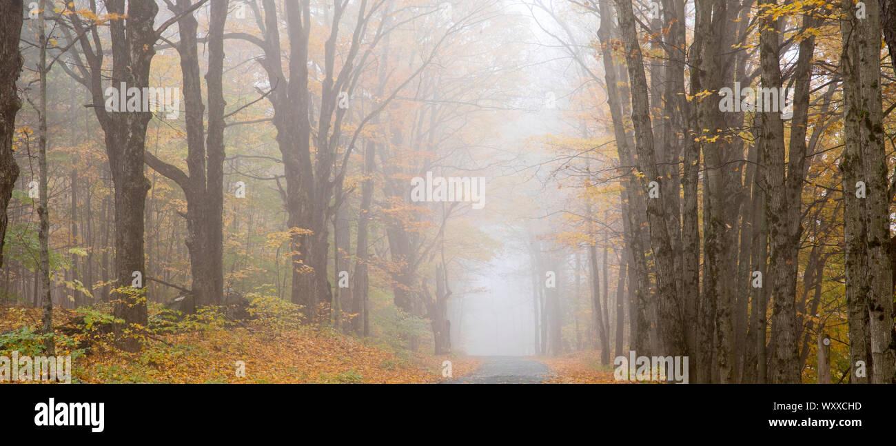 Misty carretera vacía en el otoño de Vermont, Nueva Inglaterra, EE.UU. Foto de stock