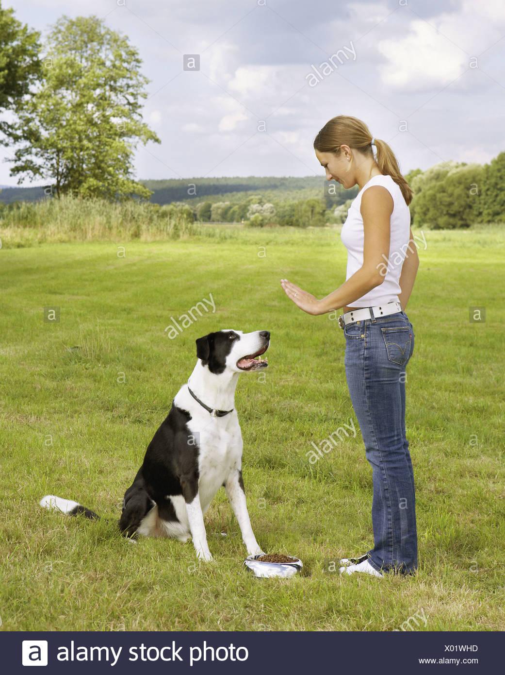 """La educación del perro : mujer con la mitad de la raza perro - """"siéntese"""" Imagen De Stock"""