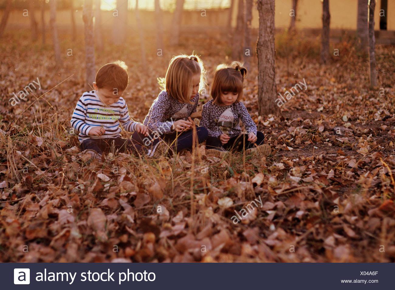 Tres niños sentados en el bosque jugando con las hojas de otoño Foto de stock