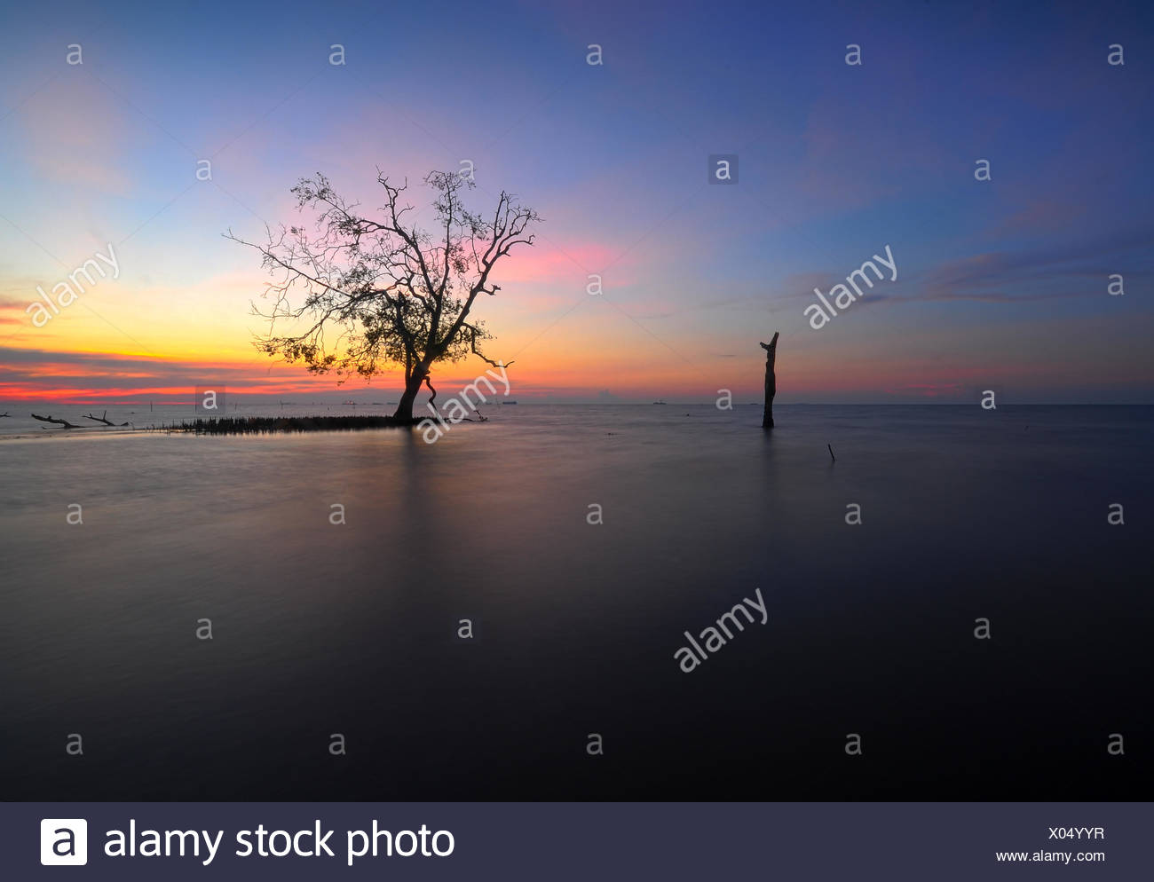 Malasia, Selangor, Banting, único árbol en Kelanang playa en el atardecer. Imagen De Stock