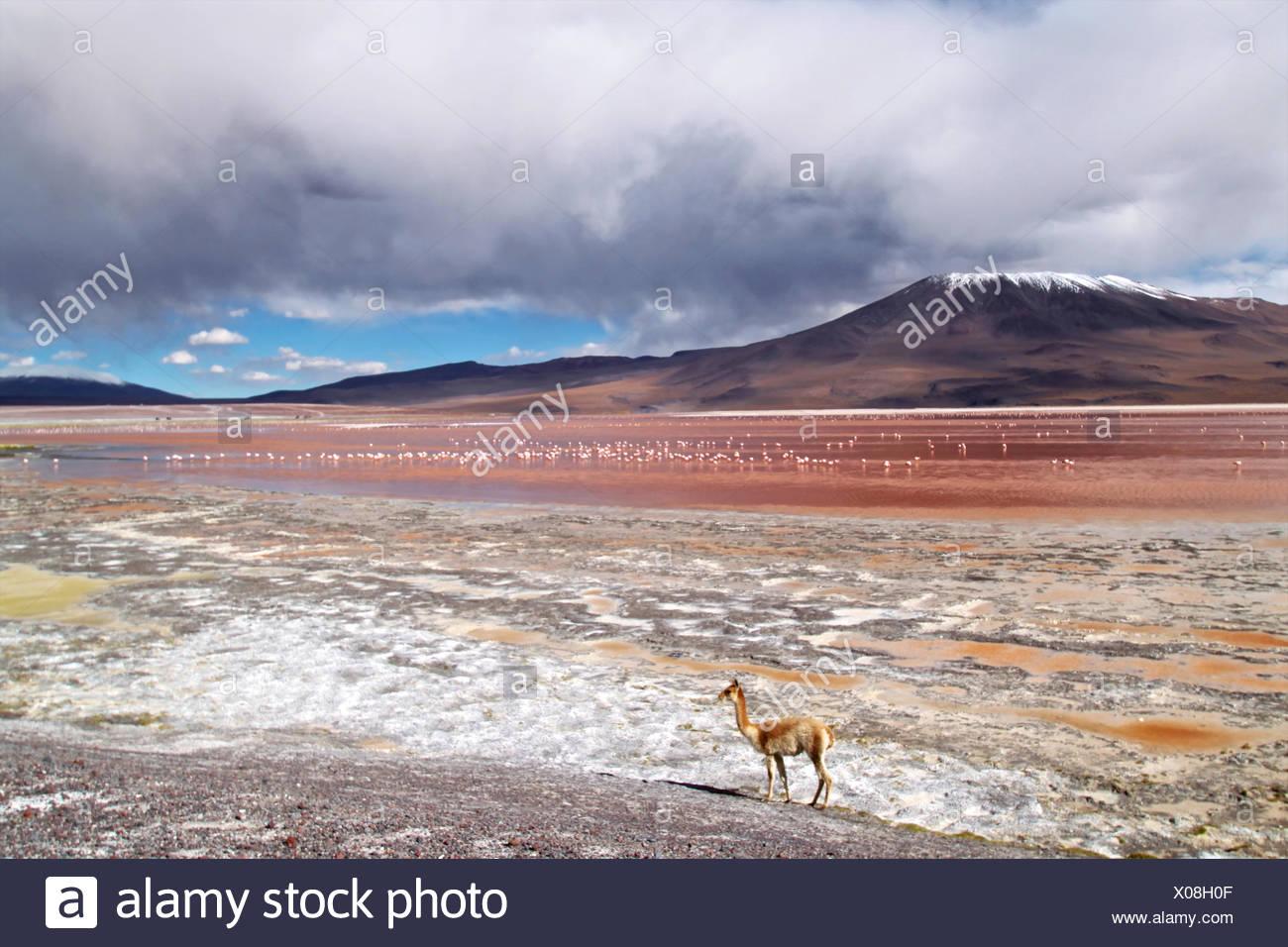 Laguna Colorada, Bolivia Imagen De Stock