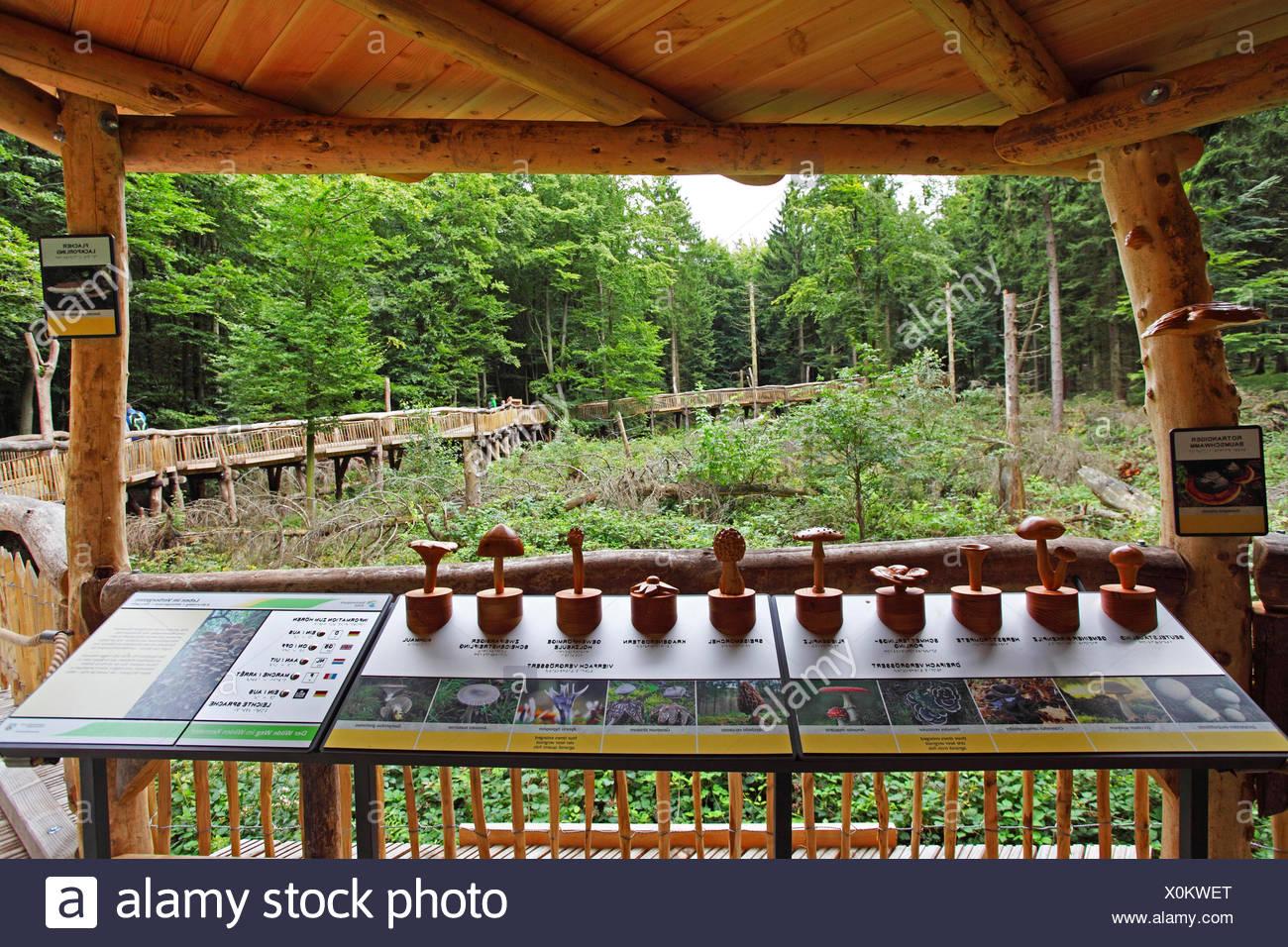 Wilderness Trail en el parque nacional Eifel, patrones de setas, en Alemania, en Renania del Norte-Westfalia, parque nacional Eifel, Heimbach Imagen De Stock