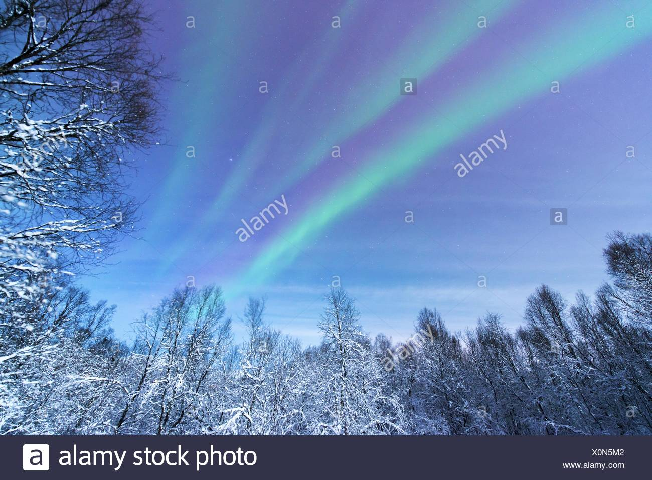 Aurora sobre bosque nevado paisaje, Noruega Troms, Tromsoe Imagen De Stock