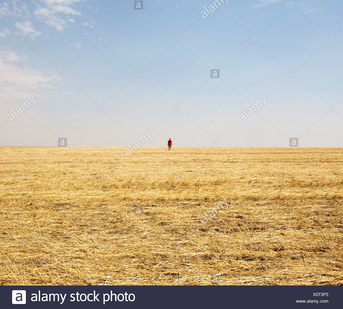 Un hombre de pie en el horizonte de un campo de rastrojo. Foto de stock