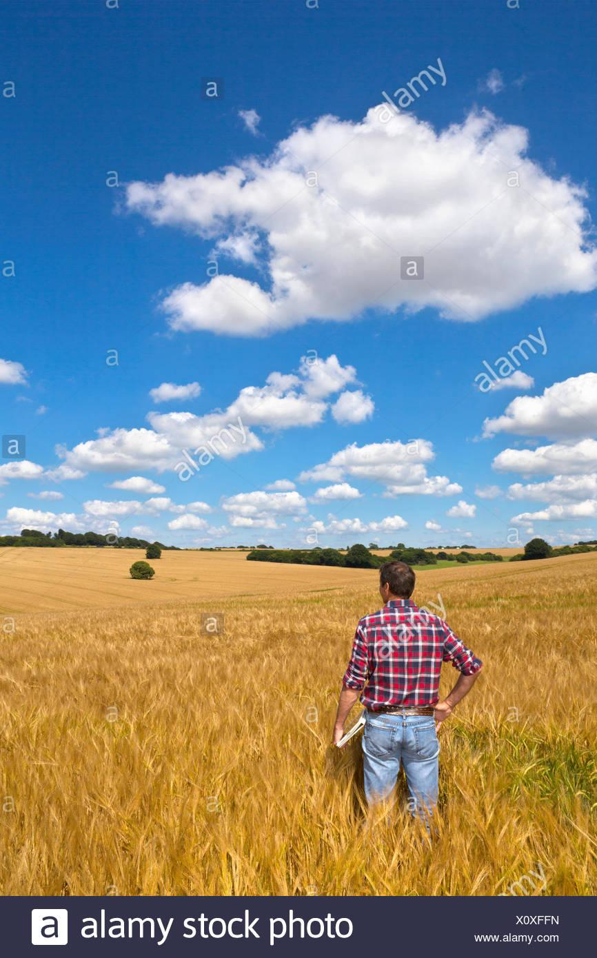 Mirando el agricultor rural soleado campo de cultivo de cebada en verano Imagen De Stock