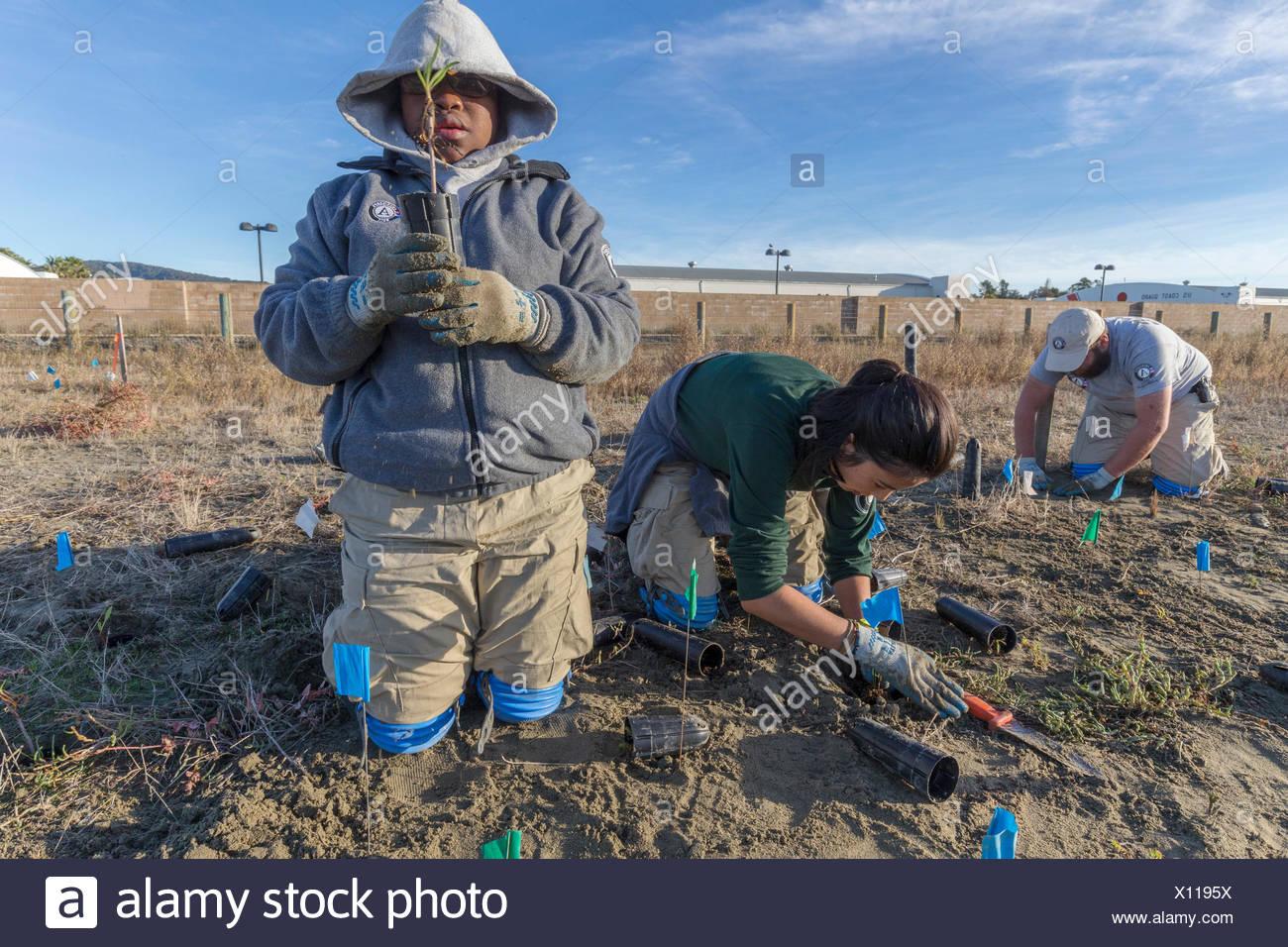 Tres voluntarios de americorps plantar especies nativas de los humedales en el pantano de marea campo hamilton restaurado,novato,California,Estados Unidos Imagen De Stock