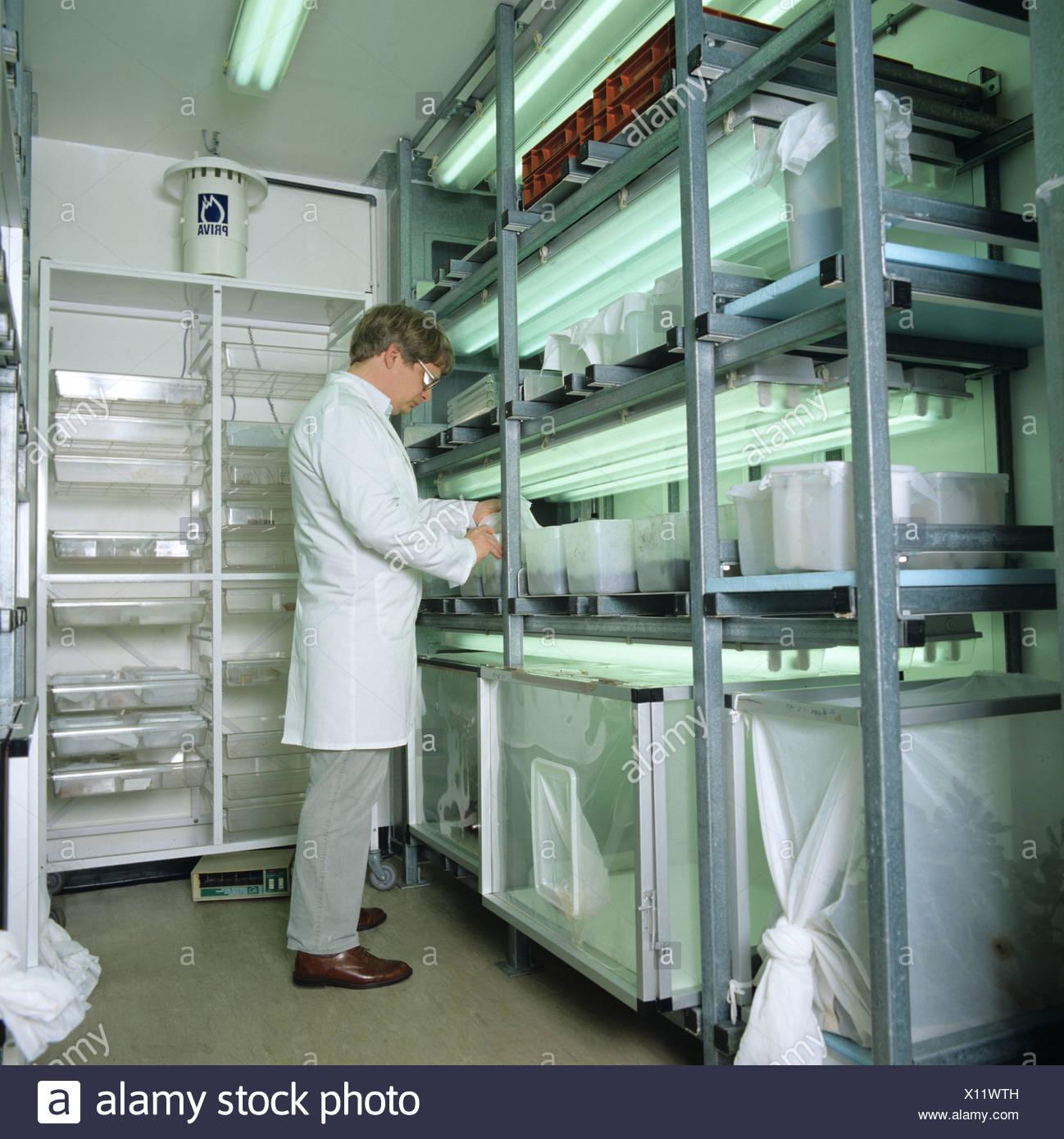 Habitaciones de ambiente controlado para la cría de insectos para la investigación de plaguicidas Imagen De Stock