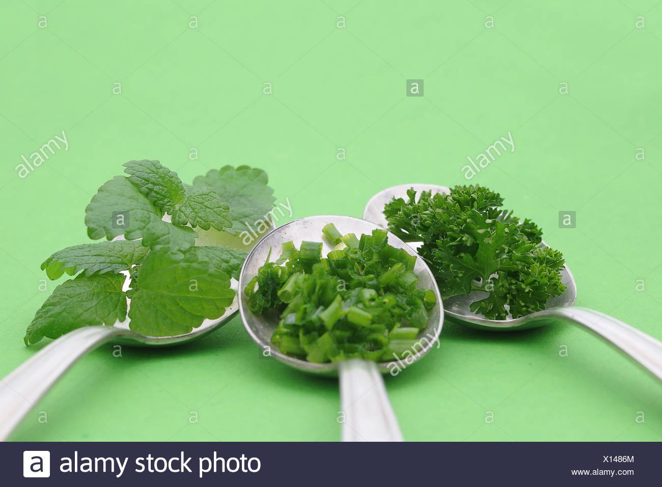 Las hierbas frescas, perejil, cebollino, menta, en viejas cucharas Foto de stock