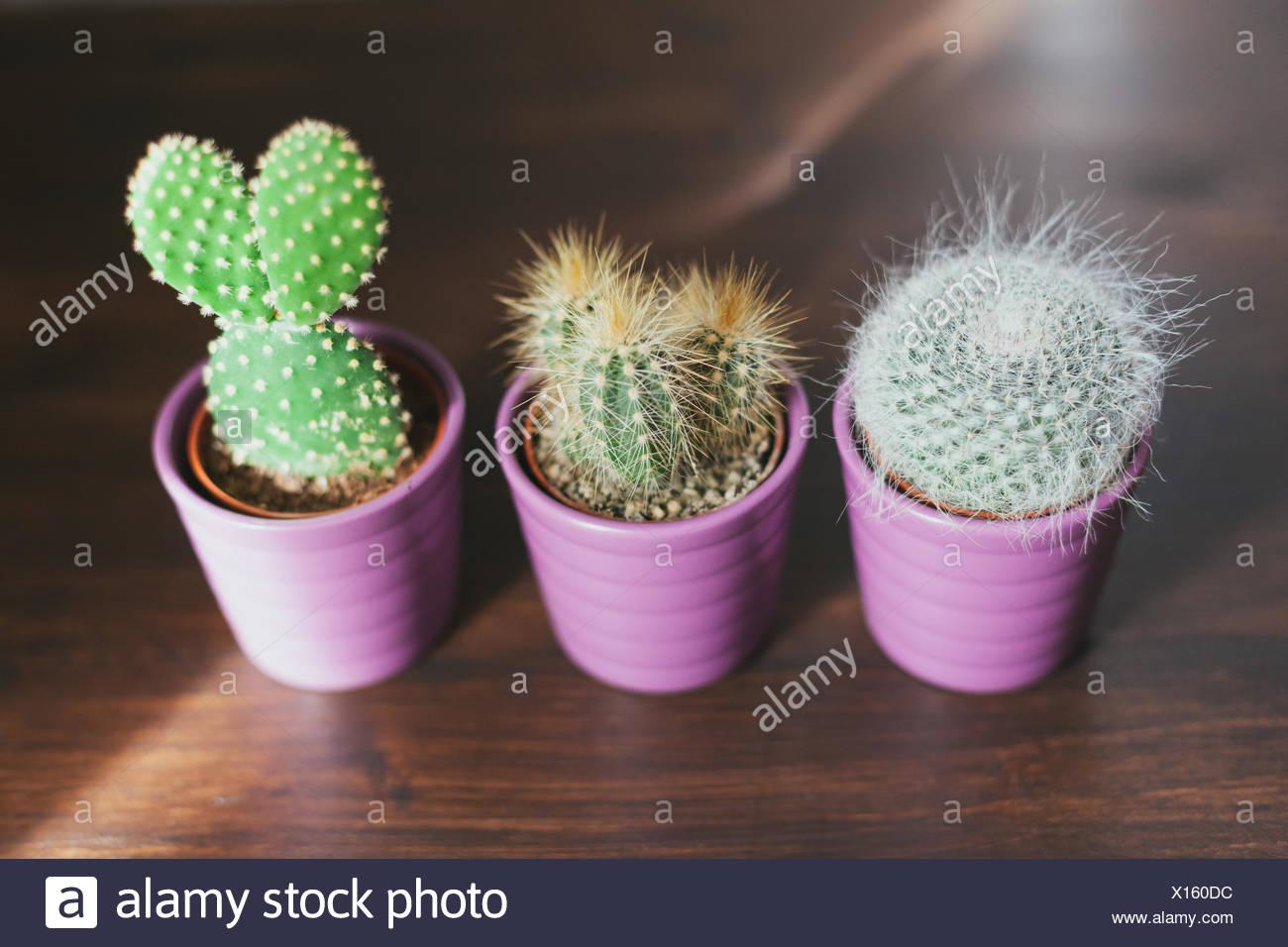 Un alto ángulo de visualización de cactus en macetas sobre piso de madera Imagen De Stock