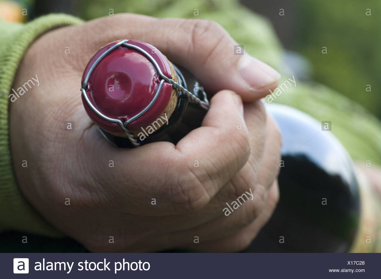 Las manos del hombre, mantenga la botella de sidra, media de cerca, botella, frasco de cristal, botella de vino espumoso, botellas de sidra, sidra, vino, corcho, botella de vino espumoso de cork, rejilla de alambre, detalle, clip, vino, sidra, en francés, chispeante, burbujeante, ácido carbónico, bebidas, alcohólicas, estrechamente, cerrado, gente, hombre, detalle, manos, Imagen De Stock