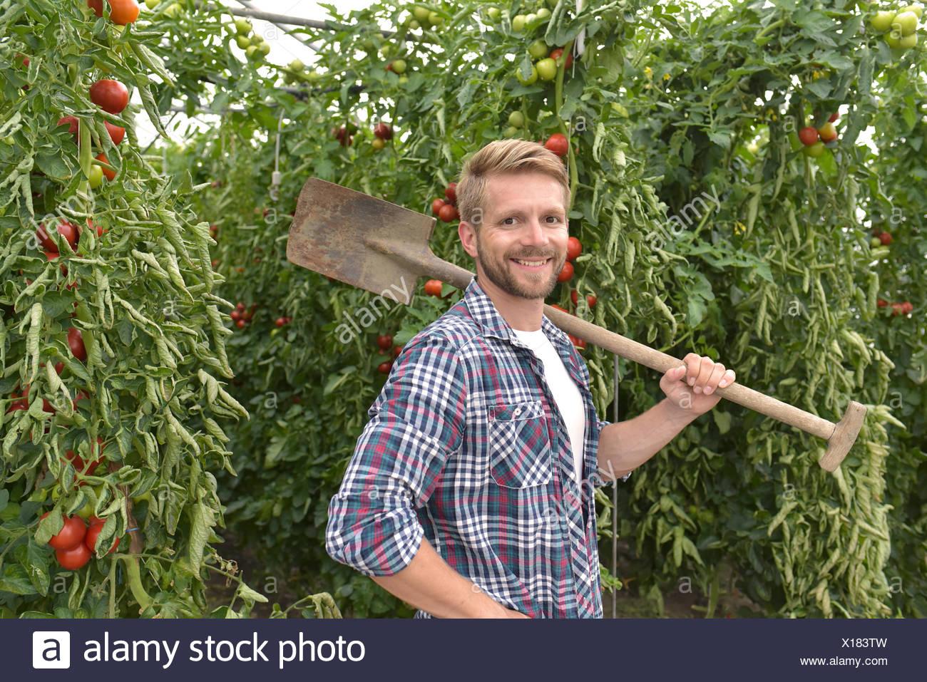 Retrato de contenido jardinero en invernadero con plantas de tomate Imagen De Stock