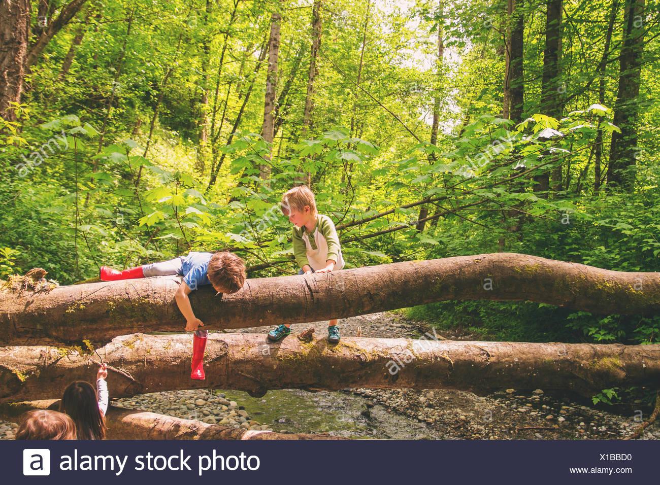 Dos muchachos escalar árboles por un arroyo Imagen De Stock