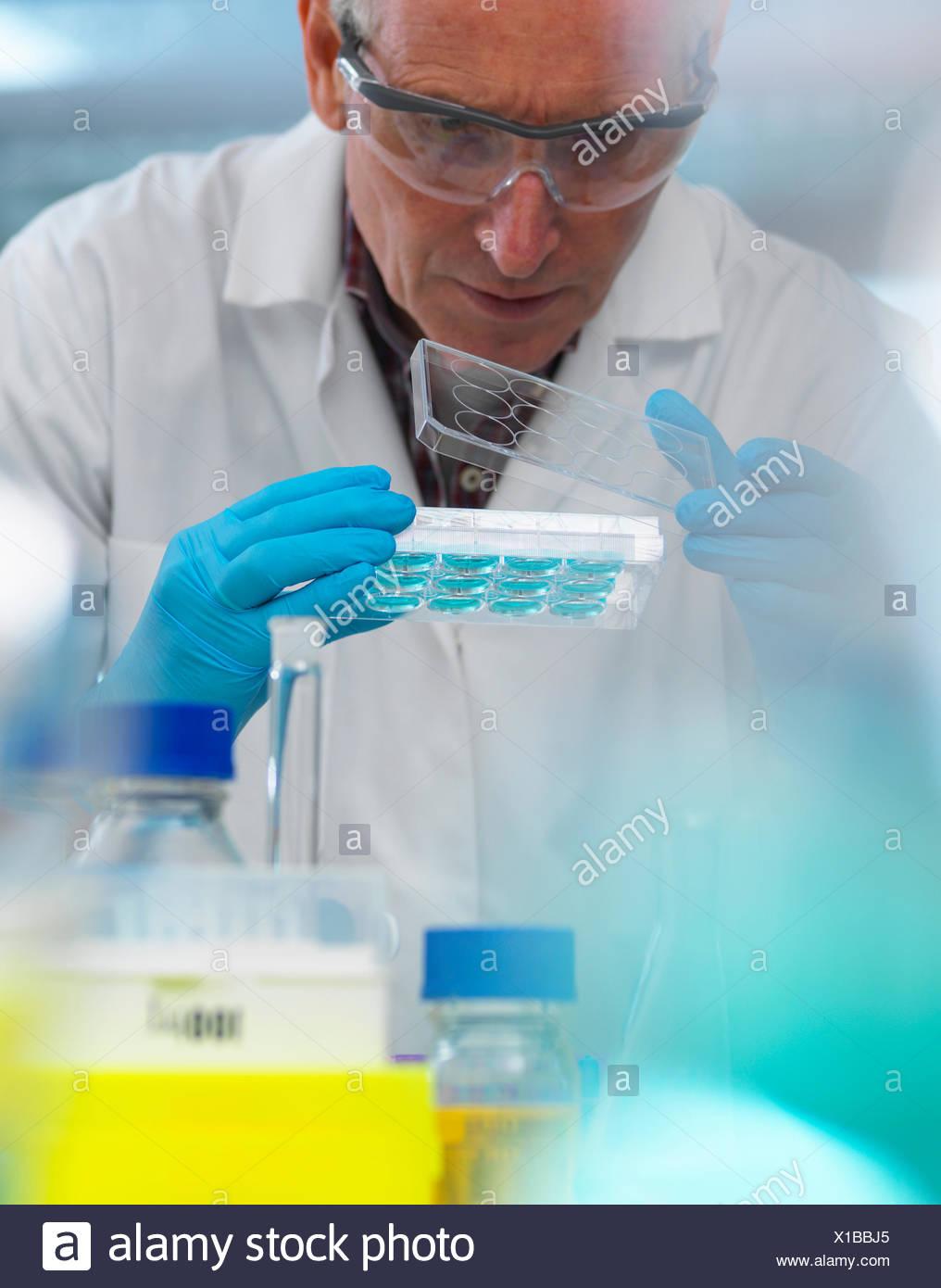 La investigación en biotecnología, el científico ver muestras en una placa de pocillos múltiples durante un experimento en el laboratorio. Imagen De Stock