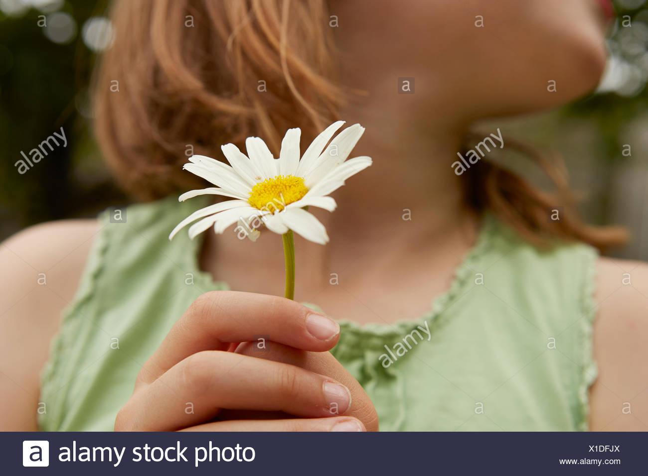 Imagen recortada de Chica sujetando la flor de margarita Imagen De Stock