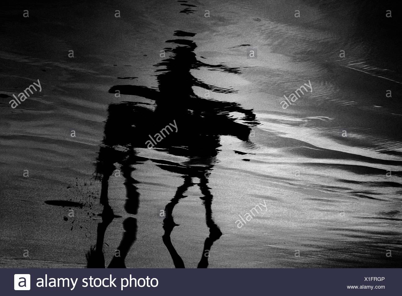 La reflexión de la persona en el montar a caballo en la playa Foto de stock