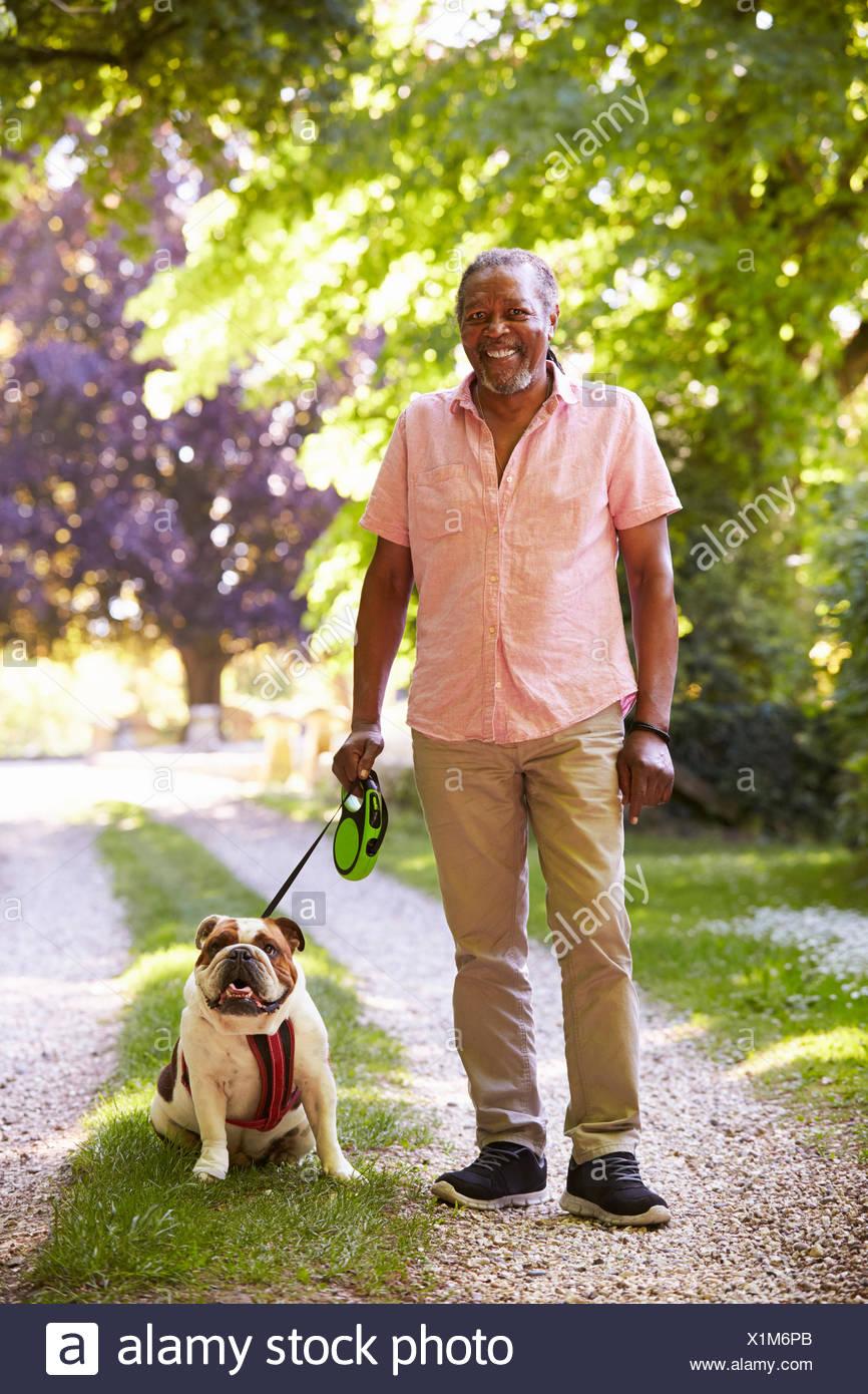 Retrato del hombre caminando senior en el paisaje de bulldog mascota Imagen De Stock