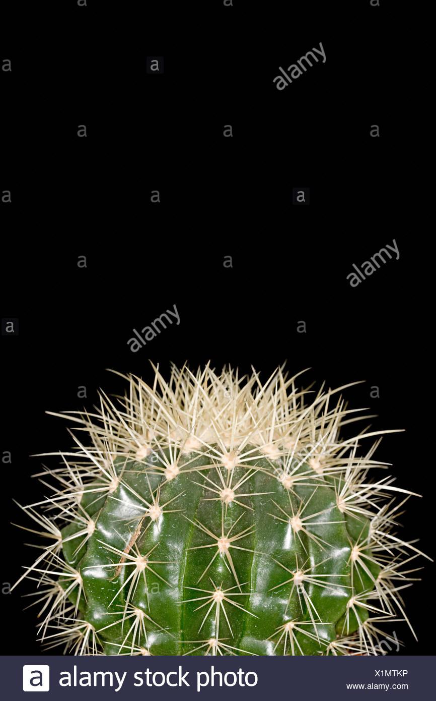 Cactus Imagen De Stock