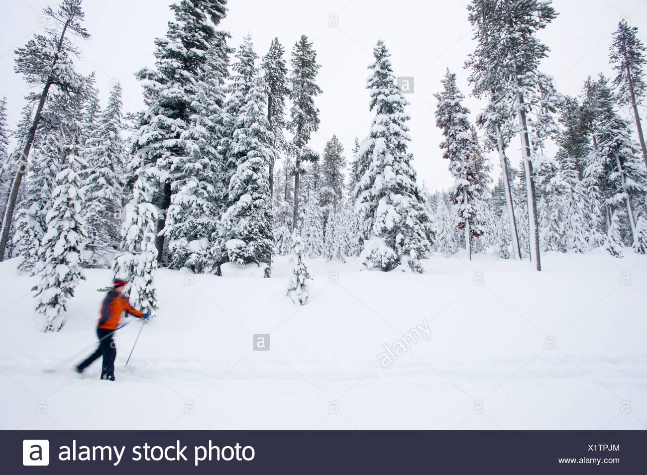Una joven del esquí de fondo en un sendero en la nieve en Bend, Oregon (movimiento borrosa). Imagen De Stock