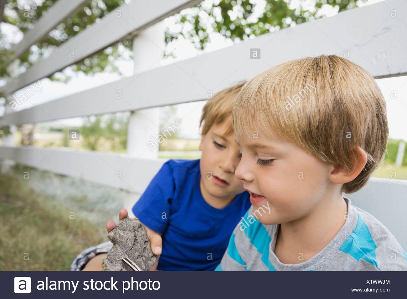 Los muchachos explorando la corteza de los árboles Imagen De Stock