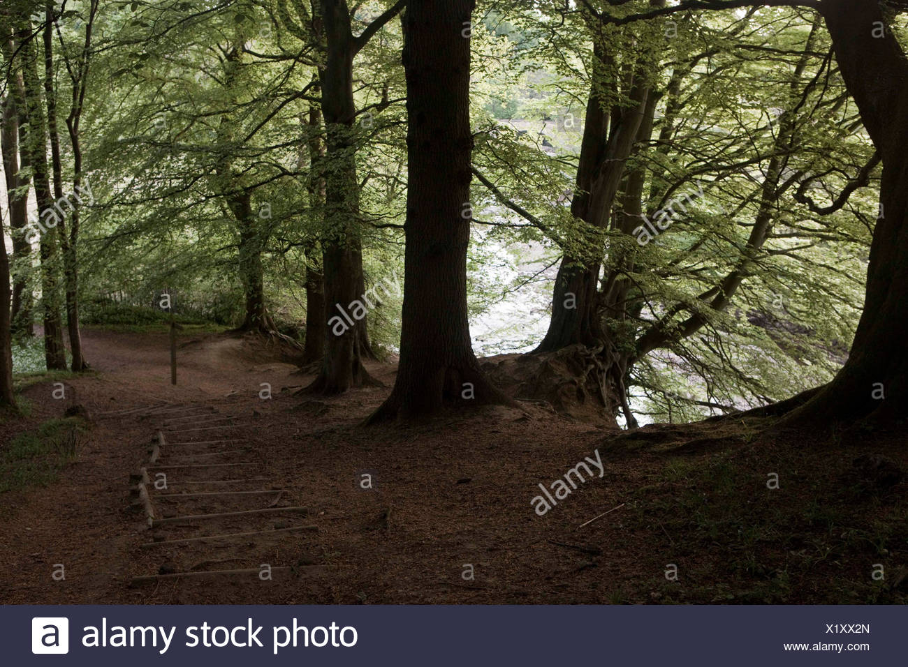 Escena del bosque Imagen De Stock