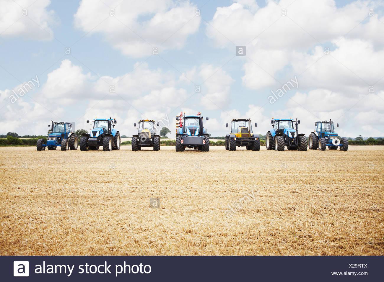 Tractor cosechar granos en campo de cultivo Imagen De Stock