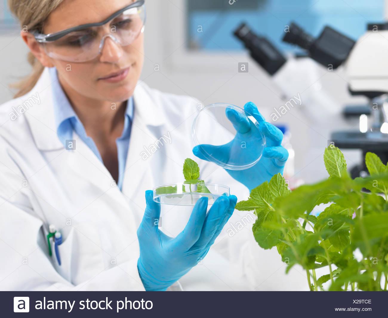Desarrollo de visualización científica de plantas experimentales en laboratorio de investigación Imagen De Stock