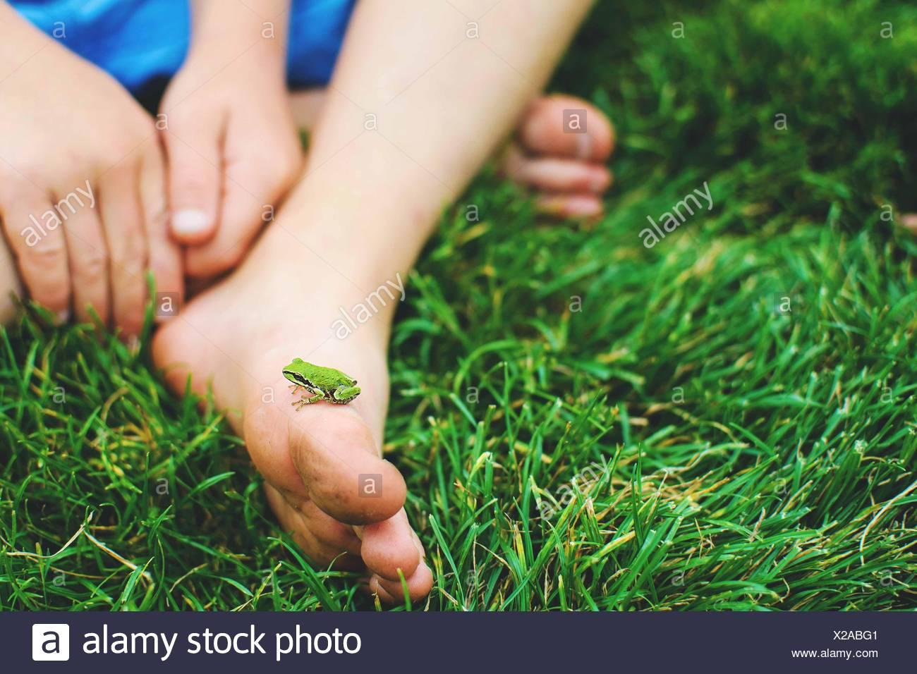 Primer plano de una rana en miniatura a pie de un niño Foto de stock