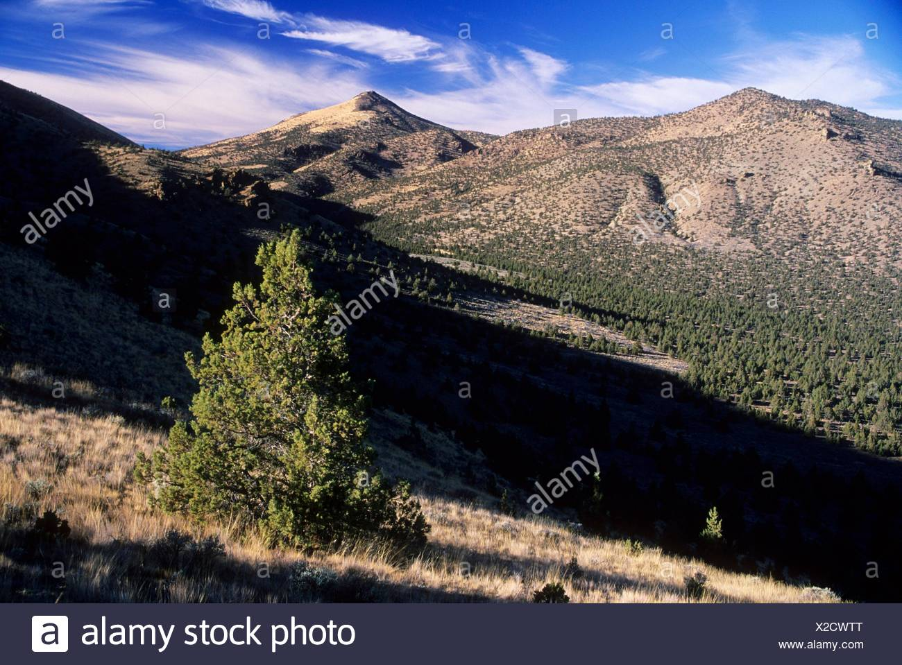 Juniper Canyon Imágenes De Stock & Juniper Canyon Fotos De Stock - Alamy