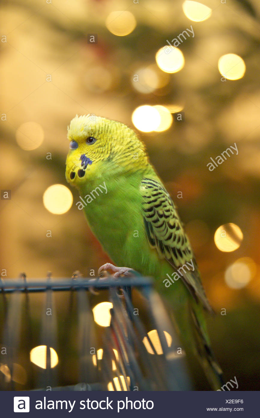 Parrot Screws Imágenes De Stock & Parrot Screws Fotos De Stock - Alamy
