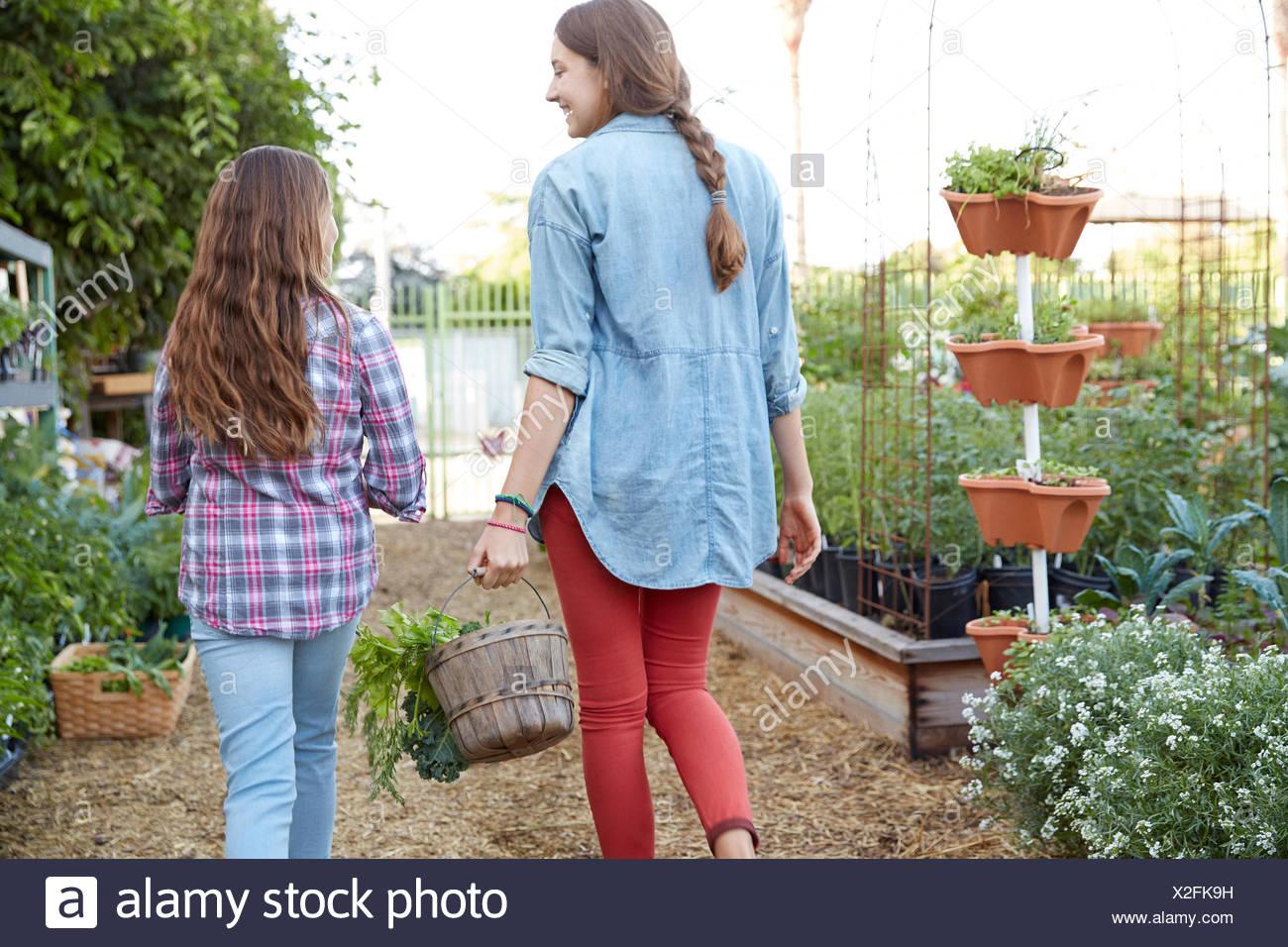Hermanas latinas cosechando vegetales en el jardín Imagen De Stock