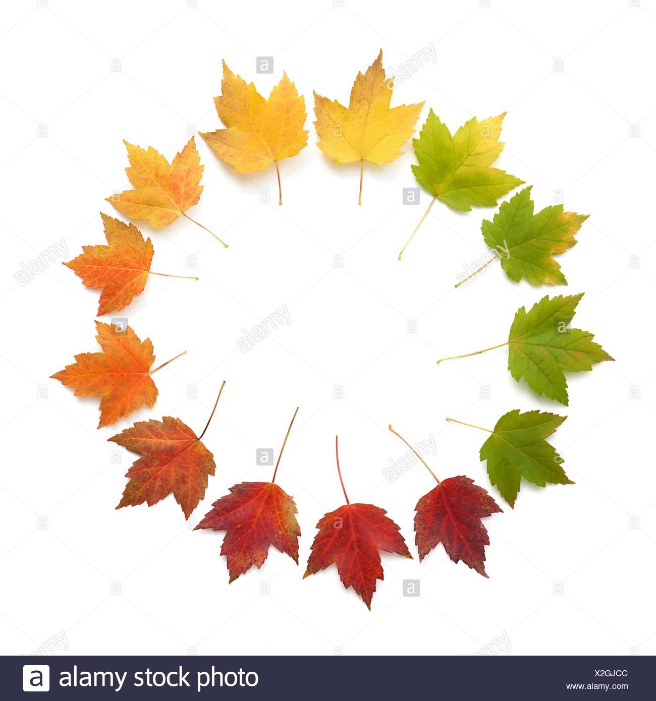 Hojas de otoño en un círculo, Foto de estudio. Foto de stock