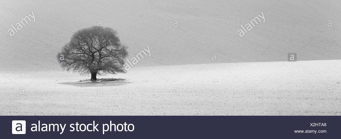 Árbol aislado en el paisaje cubierto de nieve Imagen De Stock
