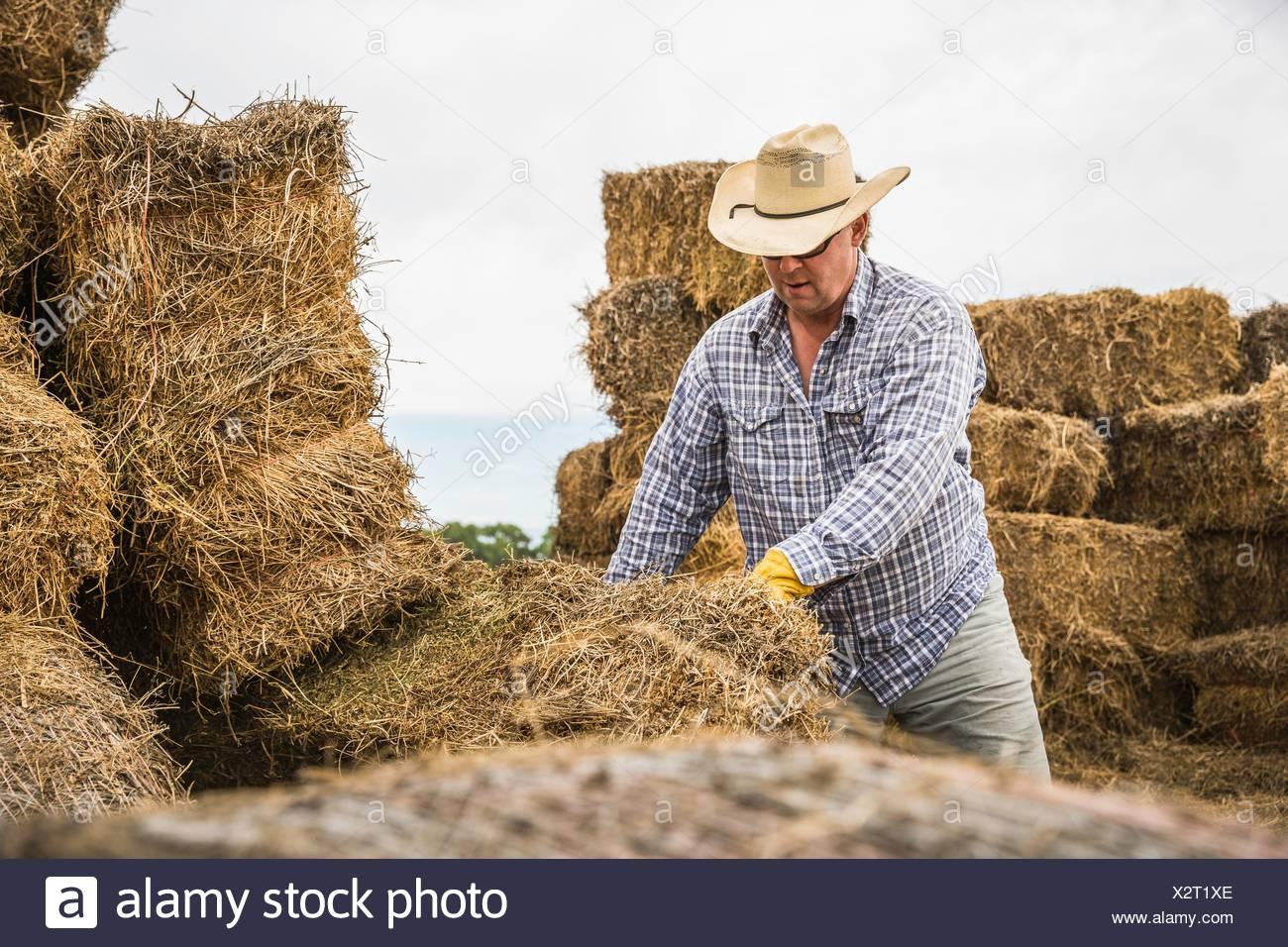 Hombre maduro llevar sombrero de cowboy mover pacas de heno Imagen De Stock 74b4bc9636d