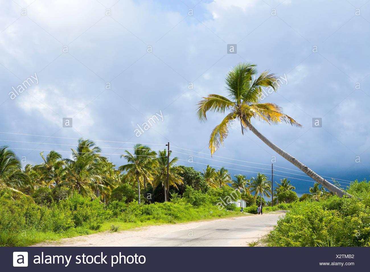Palmeras a lo largo de la carretera, Ponta Morrungulo, provincia de Inhambane, Mozambique Imagen De Stock