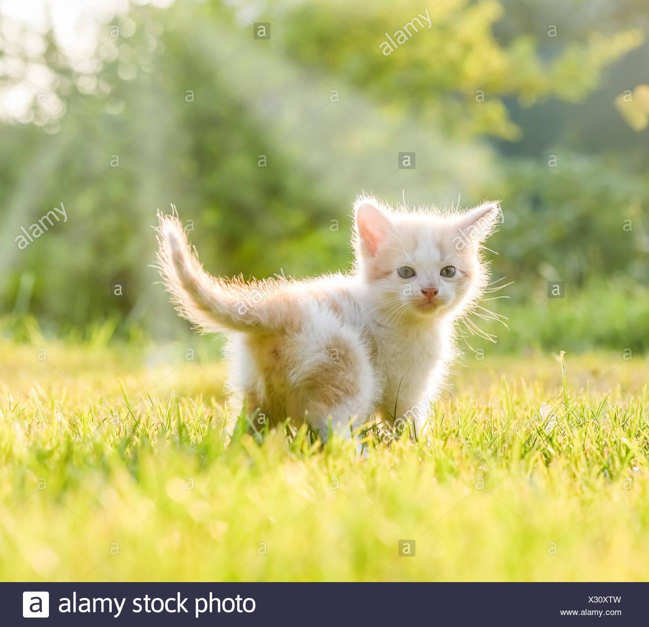 pequeños gatitos Imagen De Stock