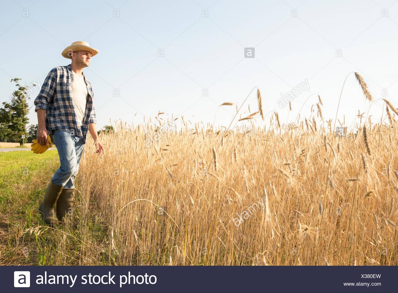 Hombre vestido con una camisa a cuadros y un sombrero de pie en un maizal 91fae977c53