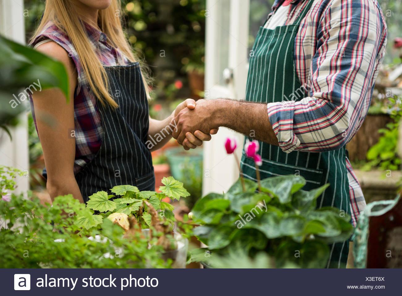 Central de colegas un apretón de manos en el greenhouse Imagen De Stock