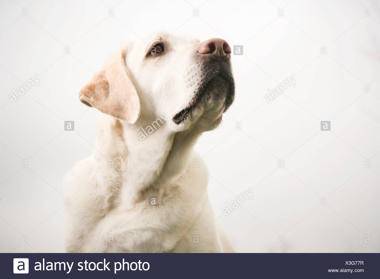 Cerca del perro Imagen De Stock
