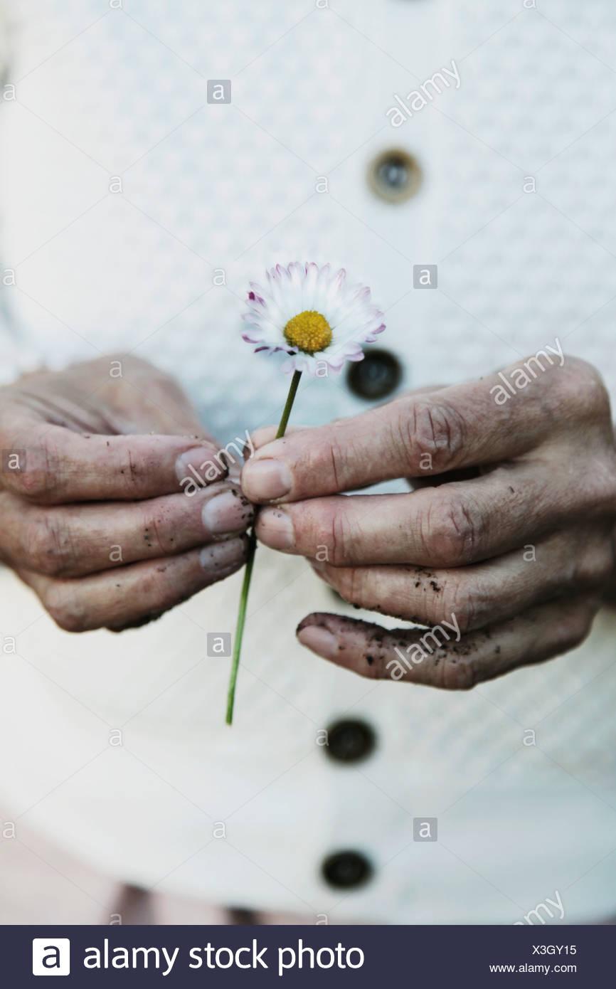 Dos manos sosteniendo una flor Imagen De Stock