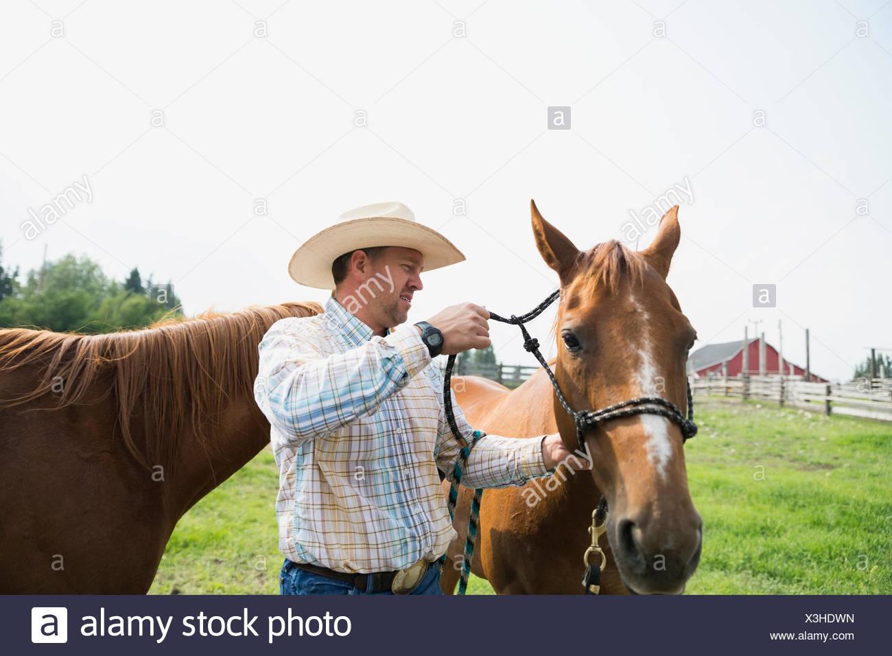 Ranchero virada hacia arriba de un caballo en la pastura Imagen De Stock