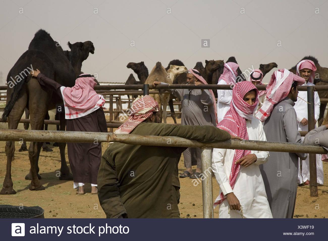 Arabia Saudita, provincia Riyadh, Riyadh, el mercado de camellos, Imagen De Stock