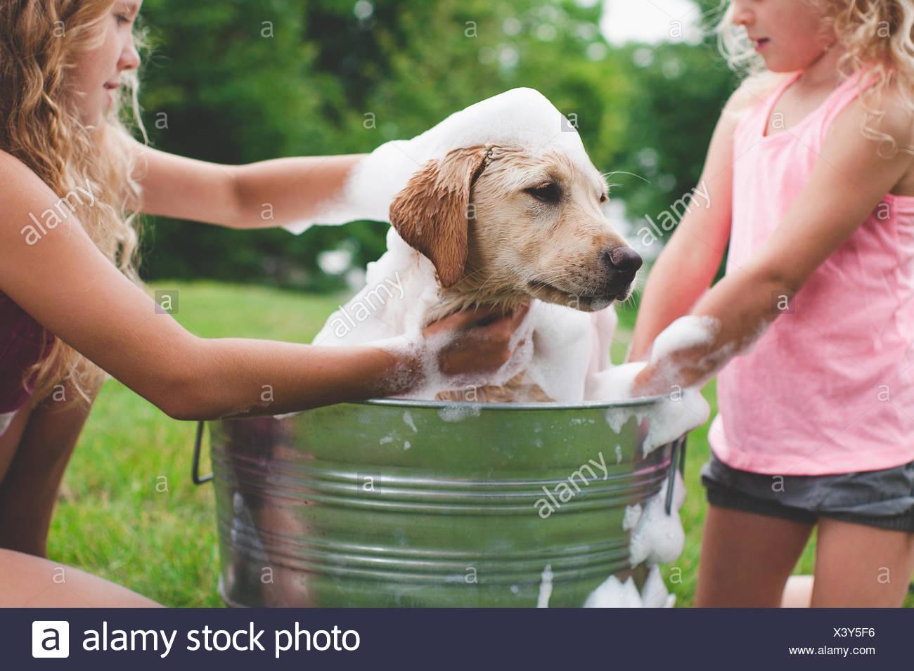 Dos hermanas bañarse mascota Labrador Retriever cachorro Imagen De Stock